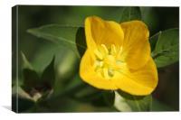 Flower macro, Canvas Print