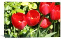 Through the tulips, Canvas Print