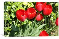 Tulips, Canvas Print