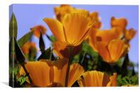 Orange Flowers, Canvas Print