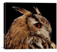 Proud Eagle Owl, Canvas Print