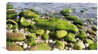 Green carpet, Canvas Print