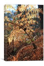Autumn fern, Canvas Print
