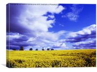 Coombe Abbey Rape Field, Canvas Print