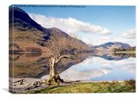Buttermere Lone Tree, Canvas Print