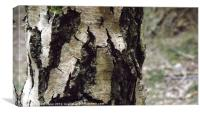 Beautiful, rustic tree..., Canvas Print