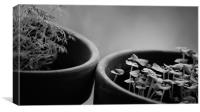 Potted Herbs, Canvas Print