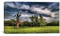 Dramatic Tree, Canvas Print