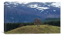 Red Deer in Scottish Highlands, Canvas Print