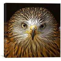 Red Kite Portrait with Texture, Canvas Print