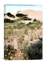 Dunes & Wildflowers at Mungo, Canvas Print