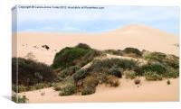 Dunes & Wildflowers, Canvas Print