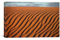 Dune detail after Sunrise, Canvas Print