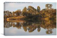 River Murray Reflections, Canvas Print