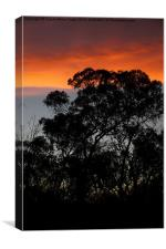 River Murray Trees at Sunset, Canvas Print