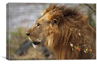 Large Male Lion Emerging from the Bush, Canvas Print