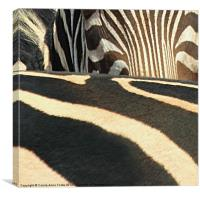 Abstract Zebra, Canvas Print