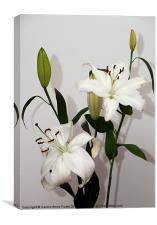 White Lily Spray, Canvas Print