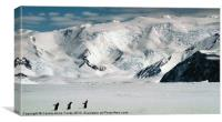 Cape Hallett Ross Sea Antarctica, Canvas Print