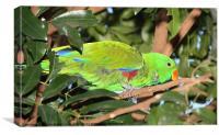Male Eclectus Parrot, Canvas Print