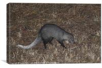 White-Tailed Mongoose Kenya, Canvas Print