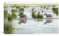 Zebra Crossing Kenya, Canvas Print