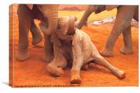 Baby Elephants PLaying Kenya, Canvas Print