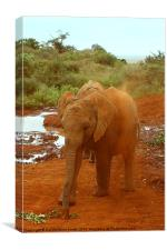Baby Elephant Kicking Up Dust, Canvas Print