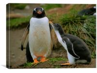 Gentoo Penguin with Begging Chick, Canvas Print