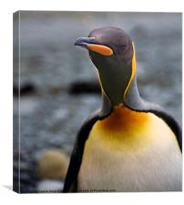 King Penguin Portrait, Canvas Print