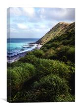 Macquarie Island, Canvas Print
