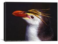 Royal Penguin Portrait, Canvas Print
