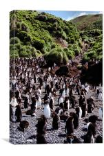 Royal Penguin Highway, Canvas Print