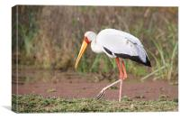Yellow-Billed Stork, Canvas Print