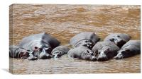 Hippos in The Mara River, Canvas Print