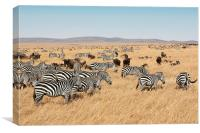 Zebra & Wildebeest Migration, Canvas Print