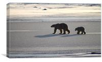 Silver Glow Polar Bears, Canvas Print