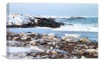 Hudson Bay Shoreline Canada, Canvas Print