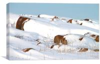 Snow Blanketed Rocks Hudson Bay Canada, Canvas Print