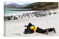 Photographer With Magellanic Penguins, Canvas Print