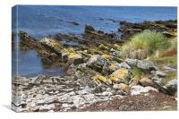 Carcass Island Coastline in The Falklands, Canvas Print