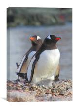 Pair of Gentoos With Chick, Canvas Print