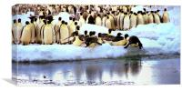 Emperor Penguins Going Fishing, Canvas Print