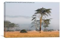 Morning Ritual in the Fog. Lake Nakuru, Kenya., Canvas Print