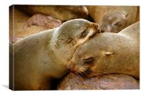 Cuddling Cousins - Cape Fur Seals, Canvas Print