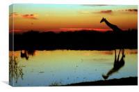 Giraffe at Sunset, Etosha, Namibia, Canvas Print