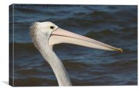 Pelican portrait, Canvas Print
