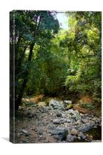 Creek in Springbrook National Park, Canvas Print