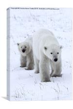 Polar Bear & Her Cub, Churchill, Canada, Canvas Print