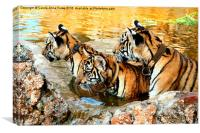 Trio of Tiger Cubs, Kanchanaburi, Thailand , Canvas Print